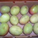 Apple Mangos