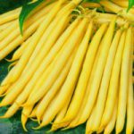 Yellow Fine French Beans